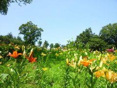 所沢の「ゆり園」♪ 青い空と美しいゆりのコラボ!