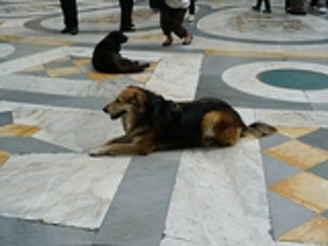 ナポリは野良犬が多いので有名ですが、暑い日だったので、ガレリアのアーケードの中では、石の床で涼む犬たちがたくさん見られました。<br />大型の犬も多いですが、みんなおとなし〜くしています。ナポリでは、野良犬たちは大事にされていて、危害を加えられることはないそうです。<br />さすがにさわろうとする人はいませんでした。犬好きにはけっこう楽しい光景です。