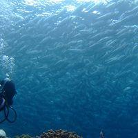 2011粟国島ダイビング