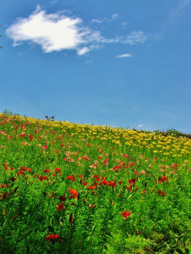 ところざわのゆり園(旧ユネスコ村自然散策園 ゆり園)<br />       <br />2005年にオープンした「ユネスコ村自然散策園 ゆり園」は2006年には、ユネスコ村閉園にともない名称が変更となった。<br /><br />広さ約3万平方mに約50種、45万球のユリがある.<br />7/1には、早咲きのスカシユリは見頃だが、ピーク過ぎ遅咲きのハイブリッドが5分咲き。<br />7/7現在、遅咲きのハイブリッドが見頃となってきた。<br />(山と自然の旅ニュース より引用)<br />「山と自然の旅」ホームページは・・  http://www.yamatabi.net/<br /><br />ところざわのゆり園については・・<br />http://www.seibu-group.co.jp/railways/enjoy/rec/yurien/index.html<br /><br />前回の旅行記は(2007年06月23日 )・・(表紙写真に)<br /><br />五彩に輝く大群落 in狭山の丘 ☆百合・ゆりの集団演技! 54枚 <br />http://4travel.jp/traveler/maki321/album/10159369/<br /><br />スカシユリ・リリー満喫 in西武ゆり園 ☆夏至翌朝・元気溌溂! 70枚 <br />http://4travel.jp/traveler/maki321/album/10159130/<br /><br />