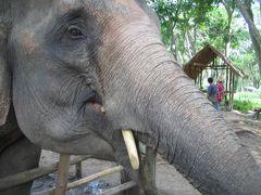 女一人弾丸 往復夜行便3日間のチェンマイで象使いになる。(2泊5日)