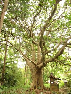 佐倉市散策(22)・・神社仏閣に名木・古木を訪ねて(樹齢1000~250年)