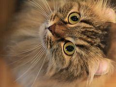 【猫カフェ24】 20匹の猫ちゃんがお出迎え 「猫の時間」