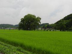 遊行の柳も磐梯熱海も雨に煙って・・・栃木~福島 1