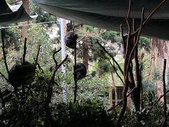 コアラのなる木
