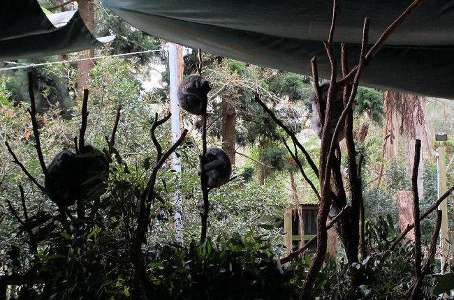 Central駅から近郊列車に乗って、バスを乗り継ぎ、コアラパーク・サンクチュアリに行って来ました。ここにはコアラのほか、鳥やカンガルーなどの動物がいます。クジャクが園内を歩いていたりと、とっても緩い動物園であります。<br /><br />なお、このアルバムは、ガンまる日記:コアラのなる木[http://marumi.tea-nifty.com/gammaru/2011/08/post-e516.html]とリンクしています。詳細については、そちらをご覧くだされば幸いです。