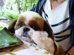 優雅な避暑♪ 上信越国立公園でリゾートライフ!Vol3 ☆軽井沢のフランス料理「ル・ベルクール」で愛犬と一緒に優雅なランチNo.1♪
