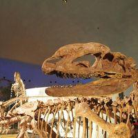 大人も子どもも楽しめます♪ド迫力の福井県立恐竜博物館