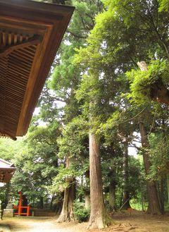 佐倉市散策(23)・・神社仏閣に名木・古木を訪ねて(樹齢200~120年)。