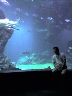 12火曜サメが泳ぐ地下水族館