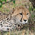 マサイマラ国立保護区周辺