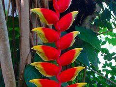 真夏の熱帯植物園 下巻