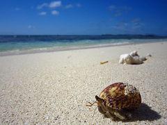 フィジーの離島マタマノア島で100万ドルの珊瑚礁に出会う旅