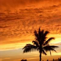study abroad in fiji