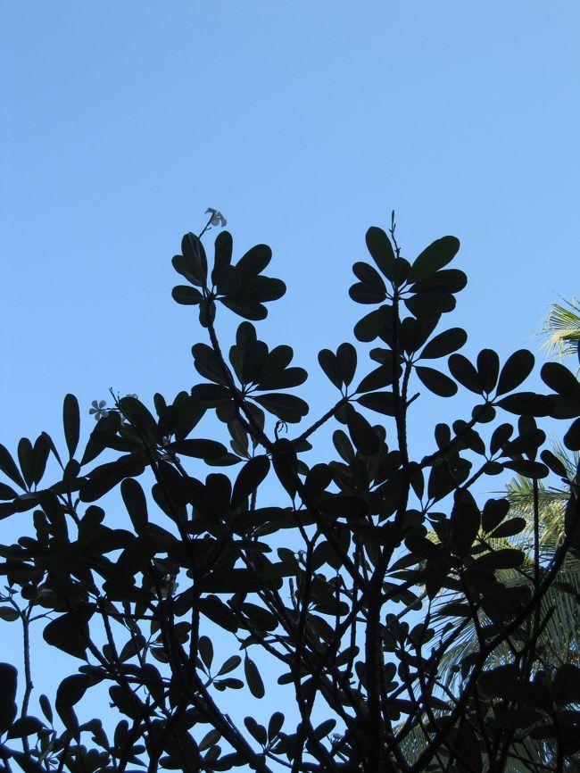 関空へ車で40分程のところに住んでいるのに何故か?成田発ANAでバリ島へ。<br />それもこれもJ○Lさんが直行便を取りやめてしまったからです。<br />我が家のためにも早く復活してください・・・。<br />関空発のジャカルタ経由便でもいいです。お願いしまーす。<br /><br />では、気を取り直して2011年バリ島旅行記です。<br />嫁さん、息子(小6)の3人家族に+義理の父の4人旅です。<br />義理の父もいるため、とにかくゆっくりとまったりとする予定です。<br /><br />7月29日 関空~羽田へ 羽田からバスで成田へ <br />                  マロウド成田前泊<br />7月30日 成田~ジャカルタ NH937 <br />      ジャカルタ~デンパサール GA412<br /> <br />7月30日~8月1日 ココナツスィート3泊(クロボカン)<br />8月 2日~8月4日 ノボテルヌサドゥア3泊(ヌサドゥア)<br />8月 5日~8月6日 ハードロックホテル2泊(クタ)<br /><br />8月 7日 デンパサール~ジャカルタ GA413<br />      ジャカルタ~成田 NH938<br /><br />8月 8日 羽田~関空 NH3821<br /><br />以上、前泊を入れると11日間の旅行記です。<br />毎日、暑いのでぼちぼちとアップしていきまーす