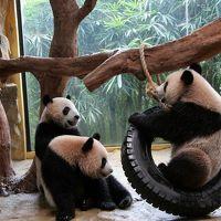 中国四川省(成都・雅安)・広州・香港・マカオのパンダを訪ねて(広州編) 2011.8