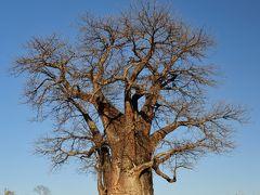 ボツワナ&ナミビアの旅(4)ブッシュマンペイント