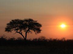 ボツワナ&ナミビアの旅(5)チョベ・SUVUTI でのゲームサファリ