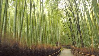 2011.8京都出張とんぼがえり2-雨の中の広沢池,広隆寺,嵐電,嵐山の竹林