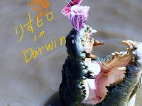 Hugs and kisses in Darwin;Ritchifileld.編:Goanna Eco Tours