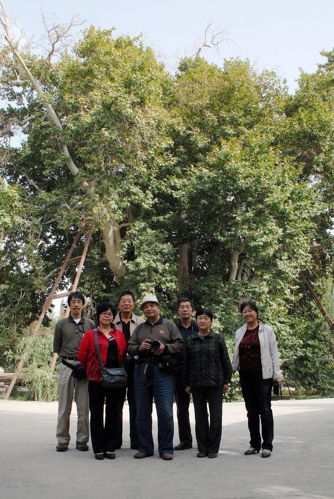 10月1日莎車戻りの続き。<br />和田を出て、一路岳普湖組の知人が居ると言う「墨玉県」に立ち寄り、そこの県政府へ向かいました。<br />政府高官繋がりですね・・・<br />そこで何をするのかと思ったら、これまた古代の大木へ案内するとの事。<br />今度の古木は「梧桐古樹(プラタナスの古木)」。<br />田舎政府はのんびりしていますね。