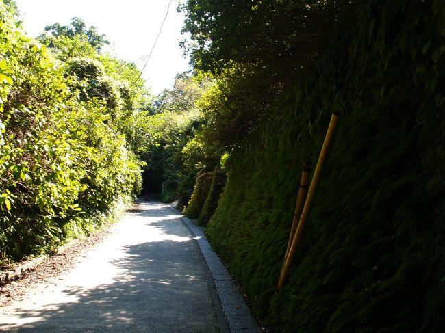 鎌倉市山ノ内と扇が谷3を結ぶ舗装道路が亀ヶ谷坂切通である。車両通行止の坂道であるが、バイクは通行しているのを見かける。切通が狭くて深いためにしばしば落石があるようだ。しかし、やぐらもほとんど見られず、鎌倉時代に造られた切通らしさは感じられない。亀ヶ谷坂切通は昭和44年(1969年)6月に国の史跡に指定されており、坂の上に史跡碑がある。<br /> 亀ヶ谷坂切通は鎌倉七口として江戸時代初期に出てくるが、鎌倉時代にこの位置に道があった確実な証拠はないようだ。切通が出来る前は山道があったはずで、霊梅社があるところから入る谷戸も今だ空き地が広がっているが、この奥からも山道があるのであろう。コートハウスが建っているところが勝因寺跡であろうか。寺から裏山に入る山道もあっただろう。勝因寺は勝縁寺ヶ谷にあったというが、コートハウスが建っている地に納まらなければ、霊梅社があるところから入る谷戸にも寺域が広がっていたかも知れない。<br /> どこにでもあるような坂道が鎌倉の魅力を伝えることはない。ただ、近道として利用しているだけである。<br />(表紙写真は亀ヶ谷坂切通)