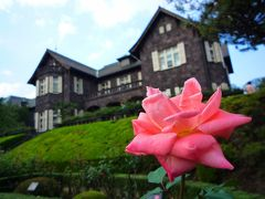 旧古河庭園の薔薇(秋)