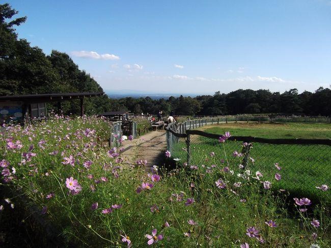 福島県芦ノ牧温泉近くの「塔のへつり」を見学したあと、那須高原まで足を延ばし、9年ぶりに南ヶ丘牧場を訪れました。