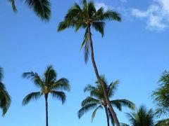 1年遅れの銀婚式・4泊6日の初ハワイ旅行 その6(おしまい)
