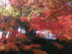京都紅葉めぐり!