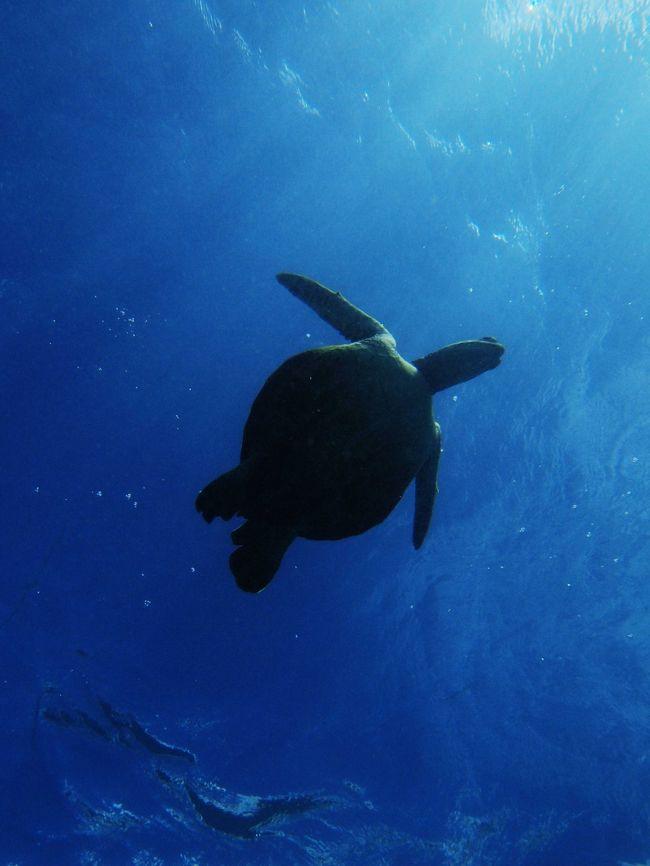 わたくしめのハワイ旅行はバカの一つ覚えでハナウマ湾がその中心<br /><br />そして今回はいつも以上に感動がいっぱい<br /><br />ハナウマ湾ではシュノーケルとダイビングの両方体験しましたが、特にダイビングでホヌ(カメ)と共に泳いだのが忘れられない。時間にすれば本当に短い時間ですがあれだけは実際に体験した人でなければそのすばらしさは分からないと思います。<br /><br />飼われているペットではなく、野生の動物と1:1で心を通わせる時間帯。<br /><br />人工物の世界で生きることに慣れてしまっているわたしにとっては貴重な体験でした。<br /><br />★ハナウマ湾のダイビングはいつもどおり<br />PISさん 泰造師匠のお世話になりました。<br /><br />http://www.pacificislandscuba.com/index.htm<br /><br />私自身、ハナウマ湾の旅行記はこの4トラに沢山掲載していますが、<br />今回はちょっと力を入れて、This is the Hanauma Bay としました。<br />