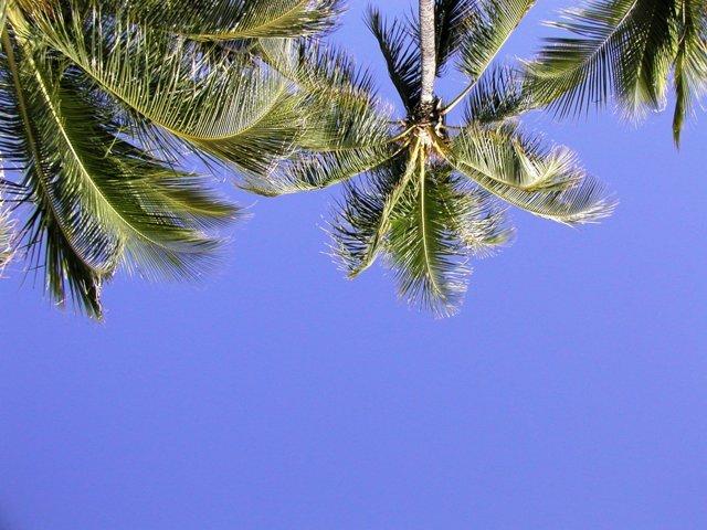 ハワイ旅行ブログ4 ホノルル・ワイキキ・ビーチ編です。<br /><br />シャングリラ・ツアー(「ハワイ旅行記?」で紹介しています)から帰った後、4日目の午後?5日目は、ワイキキ・ビーチでの?んびり過ごしました。俺はケータイも持って行かなかったし、ビーチで寝呆けて「ここはどこ?」みたいになったw (2011年2月3日~2月4日撮影)。