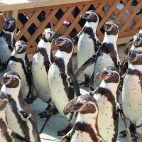 南知多ビーチランドでペンギンに癒され セントレアでちょっとだけ飛行機を見学する旅