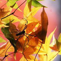 Solitary Journey [962] いつも近場散策ばかりですが、紅葉を愛でにひとっ走り~♪<和智氏ゆかりの大慈寺>広島県三次市