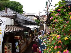 梅雨の江の島散歩・江島神社とねこめぐり