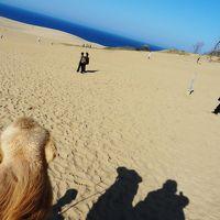 鳥取砂丘でラクダに出会い・大山・花回廊・境港を廻る