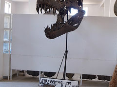 ★サハラ砂漠への出発点エルフードで、ワニの化石と出会う!