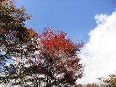 箱根 すすき野原に秋を探しに。