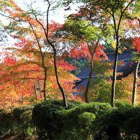 高野山の紅葉はどうかな。それから高野龍神スカイラインへ。