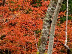 宍粟市紅葉めぐり
