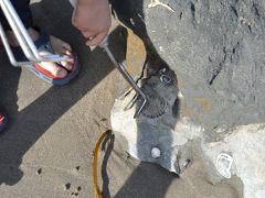 Capitola beach で、子供と化石探検