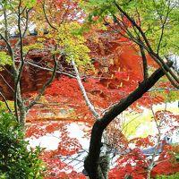 Solitary Journey [966] 三滝の観音さんも紅葉状況は×…それなりに色づいた葉っぱを切り撮ってきました。<三滝寺>広島市西区