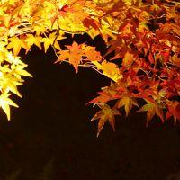 夜の公園紅葉ライトアップへ・・・in京都