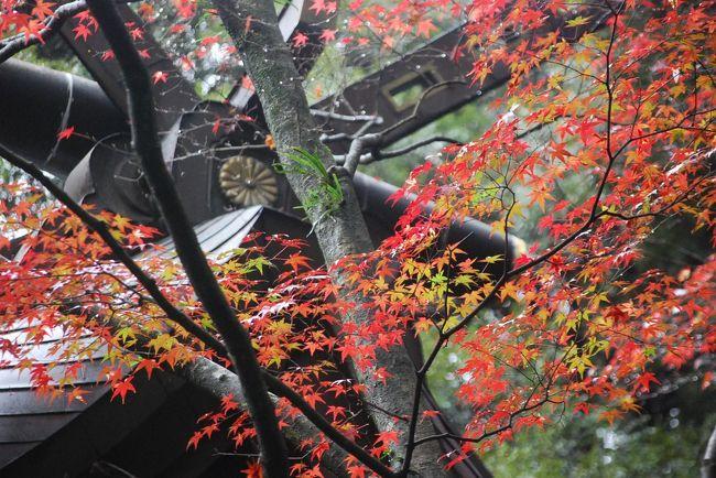 11月19日、生憎の曇天の下に予定通り太宰府行きを実行した。目的は竈門神社の紅葉を見るためである。午前10時半過ぎに福岡西新の実家を発ち、天神でのショッピング後に西鉄電車に乗り、二日市経由で太宰府駅には午後0時半に到着した。 太宰府より竈門神社迄の約3キロの道を小雨の中で歩き、竈門神社には午後1時15分頃に到着した。<br />曇天であったが、紅葉が始まったばかりの竈門神社をみることができた。 紅葉の見頃としては12月始め位のようだった。<br /><br />○竃門神社について・・・説明文による<br />霊峰・宝満山の麓に鎮座する竈門神社。若い女性を中心に縁結び(良縁)のお神さまと親しまれ、また厄除(やくよけ)・方除(ほうよけ)のお神さまと信仰が厚く、春のお花見や秋の紅葉はもちろん、宝満山の登山者で一年中にぎわいます。<br /><br /><br />*写真は竈門神社付近の紅葉<br />