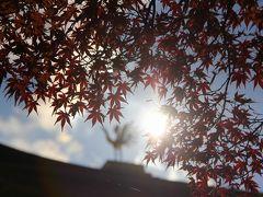 京都を歩く(100) 紅葉に彩られた世界遺産5寺社を巡る (仁和寺~龍安寺~金閣寺~上賀茂神社~下鴨神社)
