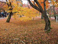 ◎京都の秋(2)東山
