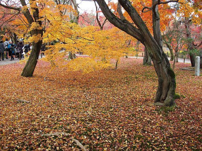 (写真は東福寺庭)<br /><br />今日は清水寺から高台寺、知恩院、東福寺、そして三十三間堂です。<br /><br />いっぱい歩きました。<br />そしてやっと東福寺に満足の紅葉がありました。<br />今年の紅葉は東福寺で打ち止めといたしましょう。<br /><br />気になるのは入場料の高さです。1寺平均5-6百円として市内交通費と合わせると10ケ所で1万円が必要です。<br />チト高すぎるのでは、お寺はん。<br />しかも入場券には料金が明記されておらず、脱税ではないの?<br />布施や協力金というなら金額は参拝者が決めるものでしょう。<br /><br />・逃げる秋追いかけて今日嵯峨野  <仏京徒><br />・京も行く春には桜秋もみじ    <烏丸光><br /><br />明日も京都を廻ります。<br />★役人、この壮大なムダ<br /> http://www.janal.co.jp/TeaTime.html<br /><br />