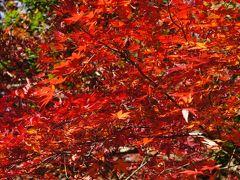 もう少し楽しめそう泉自然公園の紅葉