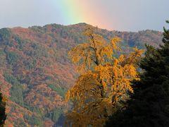 京都を歩く(101) 銀杏セレクション~黄金色の風景~