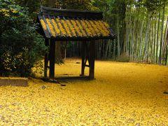 「そうだ京都、行こう」  ~ 黄葉・紅葉・クリスマスイルミネーション ~